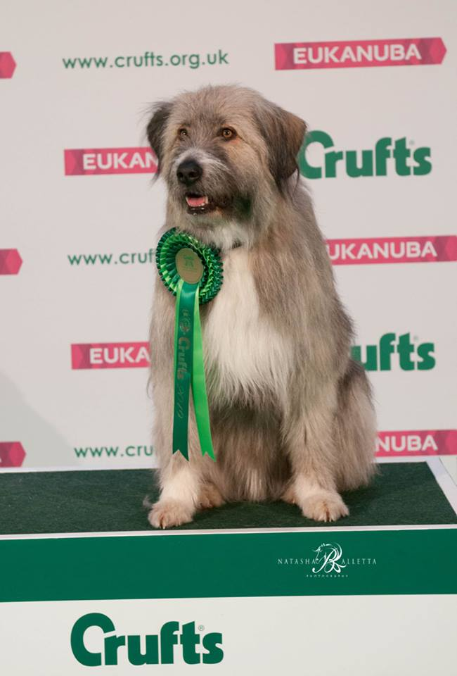 kratu the rescue dog at Crufts