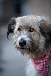 Kratu rescue dog