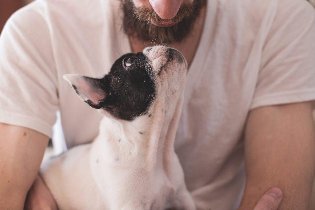 man and dog https://pixabay.com/photos/animals-dogs-friendship-pets-eyes-2607704/